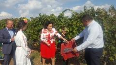 160 милиона литра вино ще произведем, 60 млн. л – за износ
