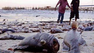 Морето край Кранево изхвърля полужива риба