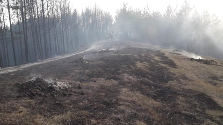 Локализиран е пожарът край с. Кузьово в Родопите, предадоха БГНЕС