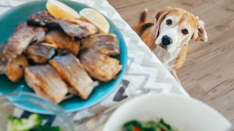 Защо кучето ни трябва да има разнообразна диета