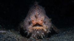 Чудовищната риба, която стресна Калифорния