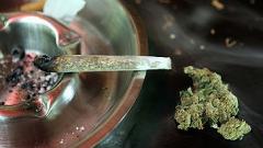 Уругвай смята да легализира марихуаната