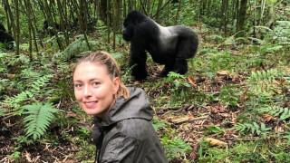 Мария Шарапова и близката ѝ среща с горилите