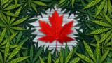 Легализацията на канабиса в Канада - губещи и печелещи
