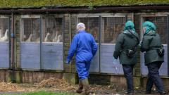Откриха птичи грип във ферма за патици в Северна Англия