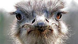 Спират продажбата на птици на импровизираните пазари в Монтана