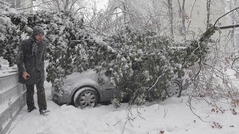 Снегът събори дървета и остави без ток част от Кюстендил