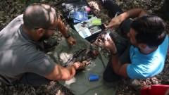 Български експерти изучават миграцията на кресливия орел