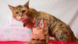 """Най-старата котка в света влезе в """"Гинес"""""""