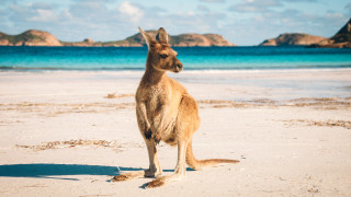 Кажи ми кенгуру, за да ти разкажа за Австралия