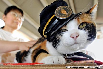 Улична котка спаси японска компания от фалит