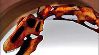 """Вкаменелост """"ревизира"""" възгледите за еволюцията на птиците"""