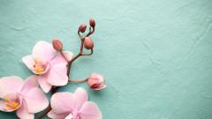 6 интересни факта за орхидеите