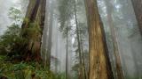 706 дка нови гори засадени в Смолянско