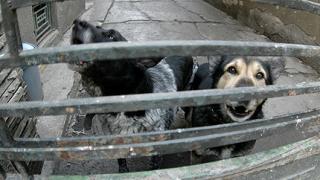 Модерен приют за животни направиха в Монтана