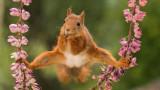 Кои са най-смешните животни на планетата