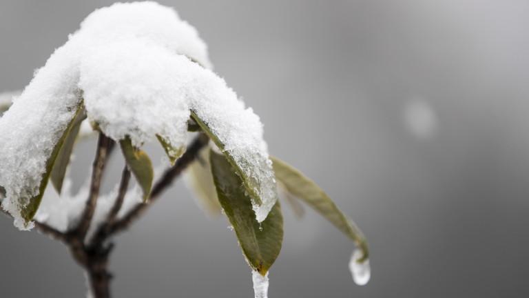 Минималните температури ще са от около минус 7° - минус
