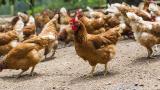 Огнище на птичи грип има само в Раковски, успокоява Танева
