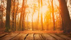 Есента е все така щедра – слънчево и топло време