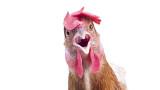 Как кокошките ще променят лицето на Земята завинаги