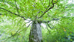 Настояват държавата да спре сечта в старите гори