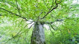 С 300 000 хектара нараснали българските гори за десетилетие