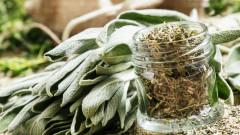 Салвия не само в кухнята, но и за здраве