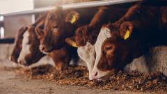 Отвори първата фабрика за синтетично месо