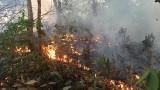 Чили помага на Бразилия за пожарите