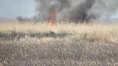 Пламнаха сухи треви до рибарници край Пазарджик