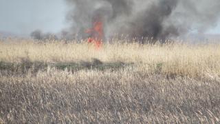 5 пожарни гасят треви и храсти в хасковско