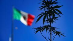 Мексико на крачка от легализиране на марихуаната