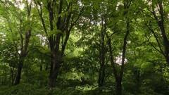 Незаконна дървесина, набези по горите от роми и бракониерски лов установиха инспектори