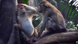 Папагалите Жако, гарваните, катериците и още от най-умните животни