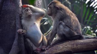 10 от най-умните животни
