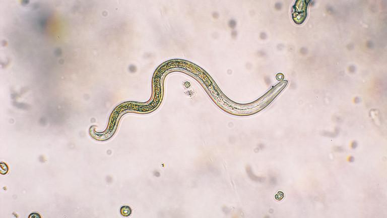 Праисторически червеи се събудиха в Сибир