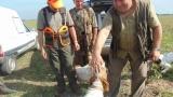 Ловците да изследват застреляните диви свине за африканска чума и трихинелоза