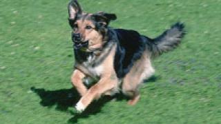 Следят кучетата в Бургас с чипове