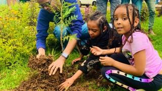 Как се засаждат 350 милиона дървета за един ден