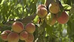 213 млади фермери от великотърновско чакат субсидии