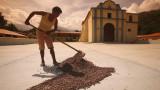 Останала към приходи, Венецуела засили износа на какао
