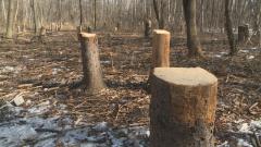 """Дърветата в столичния """"Западен парк"""" намаляват постоянно"""