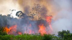 Амазонската джунгла на път да се превърне от тропическа гора в савана