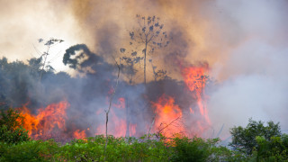 Невиждан от 13 години пик на пожарите в Амазонската джунгла в Бразилия