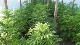 Разбиха две домашни оранжерии за производство на наркотици