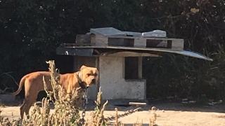 Разкриха незаконни боеве с кучета в Пловдив
