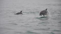 Забраняват риболова в районите с популация на делфини