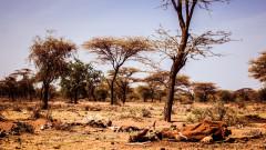 ООН бие тревога за безпрецедентен глад в Южна Африка
