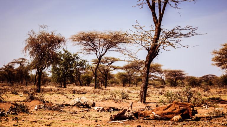 20 млн. работни места в Африка застрашени от коронавируса
