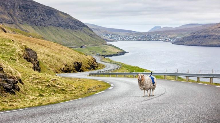 Овце с камери работят за Google